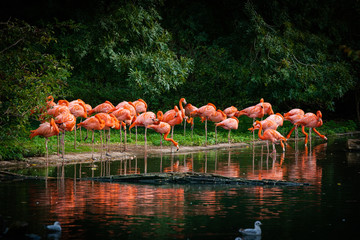Photo sur Plexiglas Flamingo flamingo standing in water with reflection