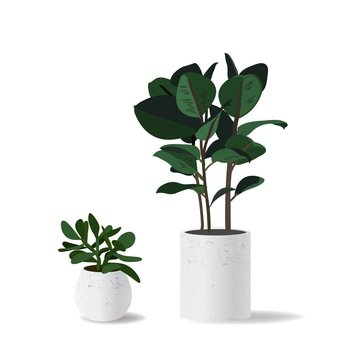 Home succulent plants in cement pots on white background. Vector illustration