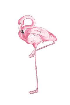 Pink flamingo vector illustration