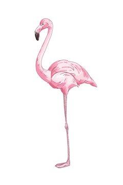 Long legged pink flamingo vector illustration