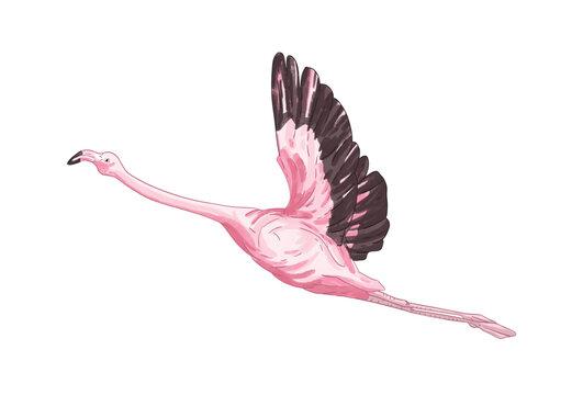 Flying flamingo vector illustration