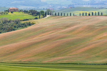 Rolling hills of different colors in soft light, Tuscany, Italy.