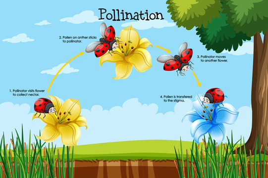 Diagram showing pollination with flower and bug