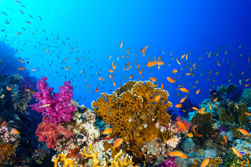 Spoed Fotobehang Koraalriffen Coral Reef at the Red Sea, Egypt