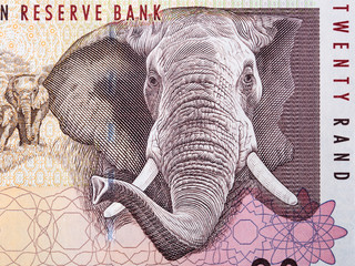 Foto op Canvas Olifant African elephant a portrait from South African money