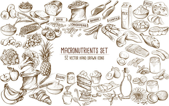 Macronutrient collection of 52 hand drawn individual vector illustrations
