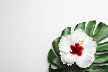 Beautiful tropical hibiscus flower and monstera leaf on white background, flat lay. Space for text