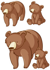 Isolated picture of grizzly bears