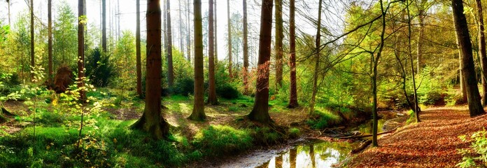 Panorama of an autumnal forest with bright sunlight shining through the trees