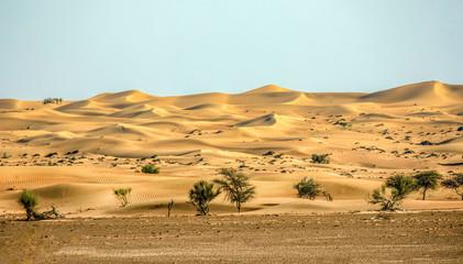 landscape in the desert
