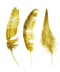 Three watercolor feathers, isolated on white background