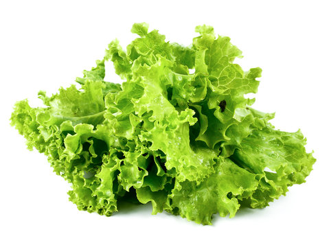 Fresh lettuce isolated on a white background,element of food healthy nutrients and herb vegetable ingredient concept