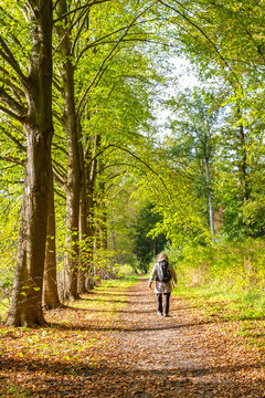 Dutch elderly female walking through beautiful autumn colors in the forest