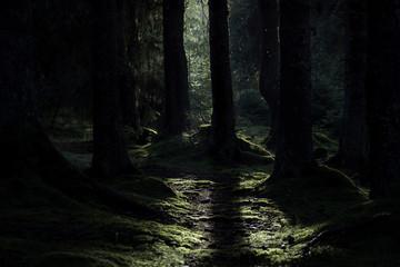 Photo sur Plexiglas Route dans la forêt Light beam in dark forest landscape. Little flies in the light.