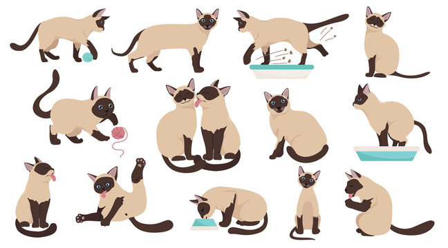 Cartoon cat characters collection. Different cat`s poses, yoga and emotions set. Flat color simple style design. Siamese colorpoint cats