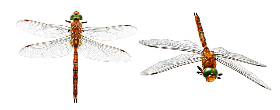 Stylized photo dragonfly from two angles isolated on white