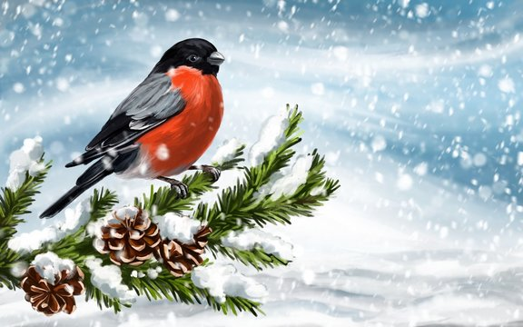 bird bullfinch on a branch of spruce on a winter background, art illustration painted with watercolors