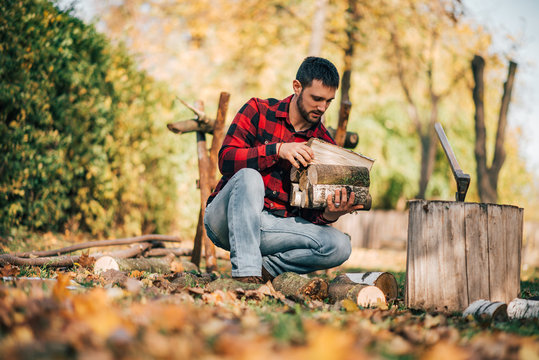 Man picking chopped fire wood on sunny autumn day.