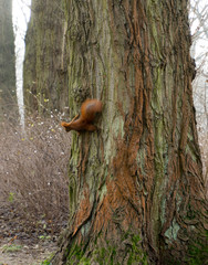 Tuinposter Eekhoorn squirrel on tree