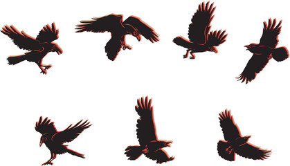 crow, raven, color, flying, vector, silhouette, image