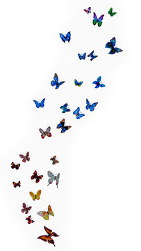 a pack of beautiful paper butterflies on a white background. illusion of butterfly flight, flight of a flock of butterflies isolated on a white background.
