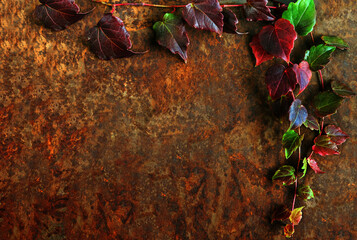 Autumn layout. Frame, five-leafed grape (lat. Parthenocíssus quinquefolia) on a rust background. Toned image. Flat lay, top view, copy space