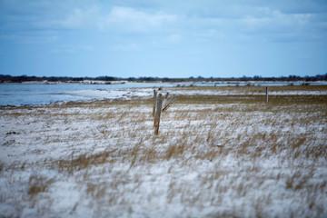 A remote beach where wild cows recently lived on Cedar Island, North Carolina
