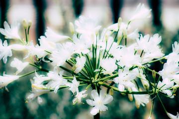 Fototapeta Closeup of colorful flower blooming in summer