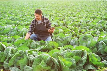 Male agricultural engineer working in field Fotomurales