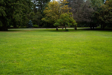 Beautiful trees and green grass in the garden. lawn in the garden.