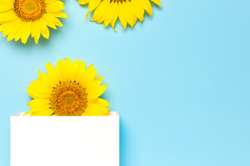 Fotomurales - Beautiful fresh sunflower and white gift paper bag on blue background. Flat lay, top view, copy space. Autumn or summer Concept, harvest time, agriculture. Sunflower natural background. Flower card