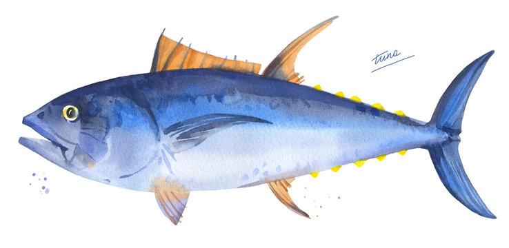 Bluefin tuna. Hand drawn watercolor fish illustration on white background