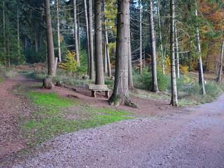 Wanderung durch den Herbstwald zur Burg Montclair