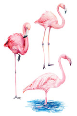 Tuinposter Flamingo set beautiful birds, pink flamingos, hand drawing, watercolor illustration on isolated white background