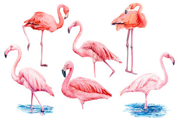 Poster Flamingo set beautiful birds, pink flamingos, hand drawing, watercolor illustration on isolated white background