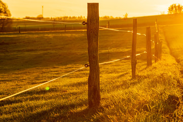 fence posts and wire fence in golden hour sunset light on grass field shot against the sun with selective focus. rural autumn scene in warm sunlight with fence next to agricultural field