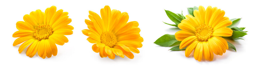 Photo sur Aluminium Marguerites Calendula. Calendula flower isolated. Marigold on white.
