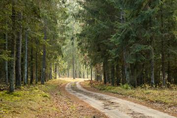 Photo sur Plexiglas Route dans la forêt Forrest - Forest Knyszyn (Poland)