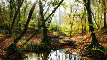 Autumn forest with brook, old trees and bright sun shining through the trees