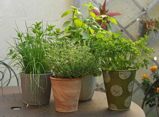 Plantes aromatiques en terrasse de jardin Wall mural