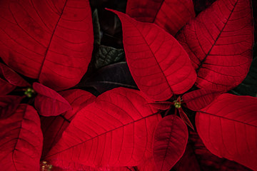 Beautiful colorful leaves and flowers of house plants in a garden, closeup, details