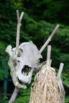Paganic animal skull on a stick.
