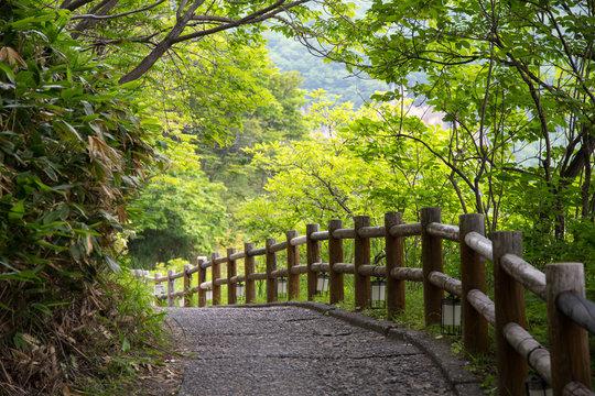 Path in a forest, Hokkaido, Japan.