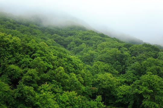 Fog rolling over a dense forest.
