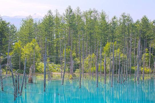 BluePond HDR, Biei Pond, Hokkaido, Japan