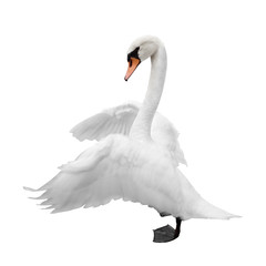Photo sur Aluminium Cygne Swan isolated on white