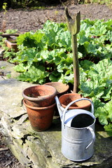 Old rustic vintage flower pots, watering can and spade, on a dry stone wall, in a kitchen garden with rhubarb, on a sunny day