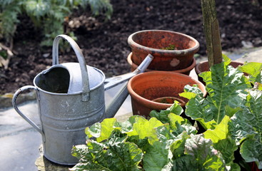 Old rustic vintage flower pots and watering can, on a dry stone wall, in a kitchen garden with rhubarb, on a sunny day