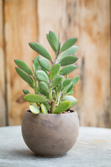Succulent plant in pot in front of rustic wood background