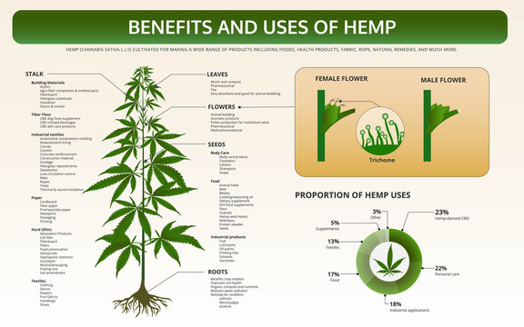 Benefits and Uses of Hemp horizontal textbook infographic illustration about cannabis as herbal alternative medicine and chemical therapy, healthcare and medical science vector.